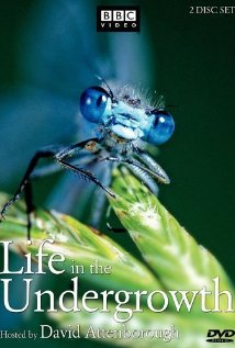 Watch Life in The Undergrowth