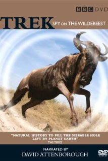 Watch Trek: Spy On The Wildebeest