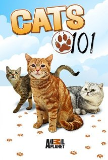 Watch Cats 101