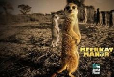 Meerkat Manor S04E13