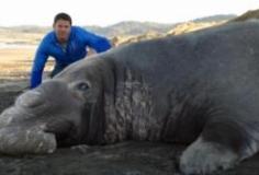 Super Giant Animals S01E01