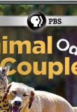 Watch Animal Odd Couples