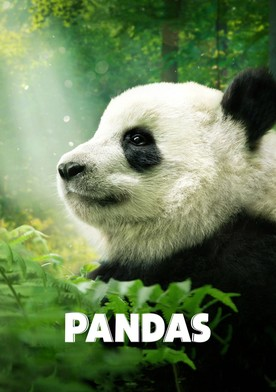 Watch Pandas Online