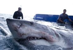 Shark Wranglers S01E10
