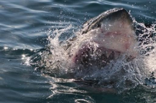 When Sharks Attack S04E03