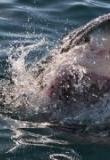 Watch When Sharks Attack