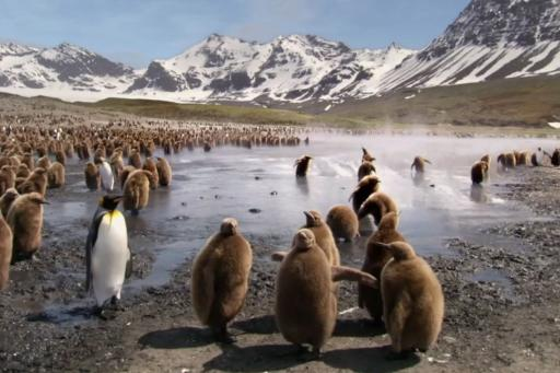 Animal Babies S01E03