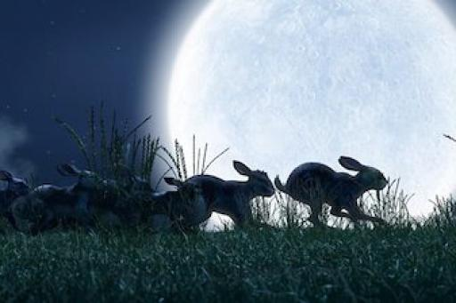 Watership Down (2018) S01E04