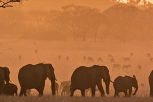 Serengeti S01E06