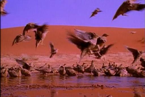 The Life of Birds S01E10