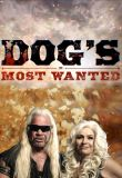 Watch Dog's Most Wanted Online