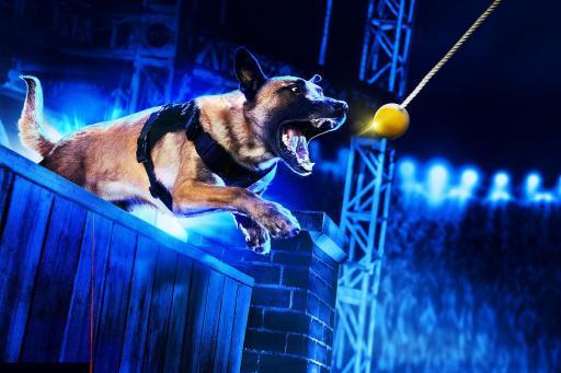 America's Top Dog S01E03