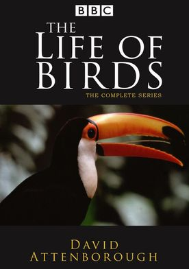 Watch The Life of Birds Online